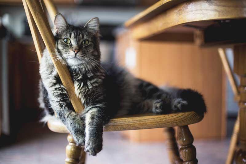 Dog Walker-Bristol-walking cat on chair